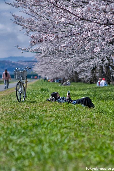 Sunday sakura